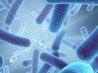Cos'è la legionella - i batteri al microscopio